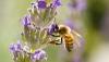 Nouvelle session de formation apicole à Berloz en septembre